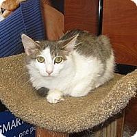 Adopt A Pet :: Duke - Farmingdale, NY
