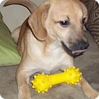 Adopt A Pet :: Coaster - Spring Valley, NY