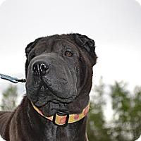 Adopt A Pet :: Maggie May - Newport, VT