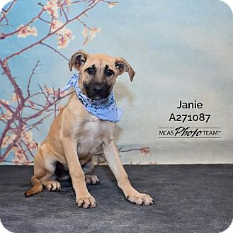 Labrador Retriever Mix Dog for adoption in Conroe, Texas - JANIE