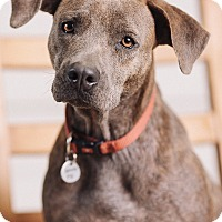Adopt A Pet :: Cara - Portland, OR