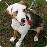 Adopt A Pet :: Cassidy - Bellingham, WA