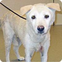 Adopt A Pet :: 353332 LF - Wildomar, CA