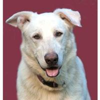 Adopt A Pet :: Casper - Glen Allen, VA