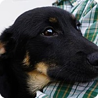 Adopt A Pet :: Jackie - LaHarpe, KS