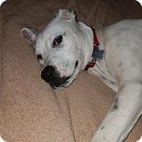 Adopt A Pet :: Trhett - Goodlettsville, TN