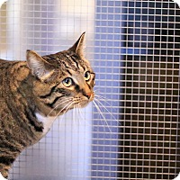 Adopt A Pet :: Kitty - Lincoln, NE