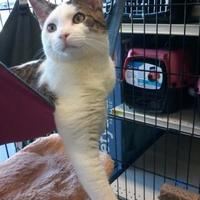 Adopt A Pet :: Venice - Kinston, NC