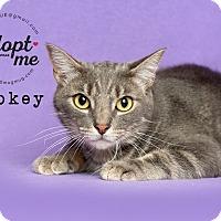 Adopt A Pet :: Smokey - Pearland, TX