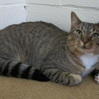 Adopt A Pet :: Apollo - Wooster, OH