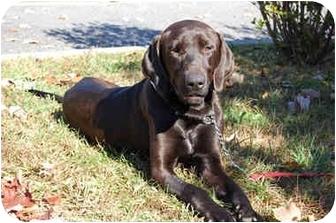 Labrador Retriever/Hound (Unknown Type) Mix Dog for adoption in Cumming, Georgia - Hud