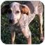 Photo 1 - Pointer/Hound (Unknown Type) Mix Puppy for adoption in Statesville, North Carolina - Bonnie and Clyde