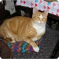 Adopt A Pet :: Cheeto - Everett, WA