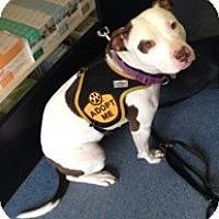 Adopt A Pet :: ANNIE - Dennis, MA