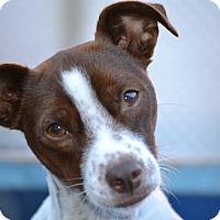 Adopt A Pet :: Canelo- I am sweet & adorable - Redondo Beach, CA