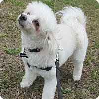 Adopt A Pet :: Hercules - Jacksonville, FL