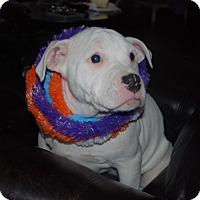 Adopt A Pet :: Minnie - Rigaud, QC