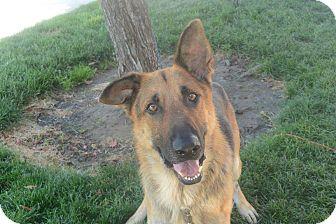 German Shepherd Dog Mix Dog for adoption in Meridian, Idaho - Wesley