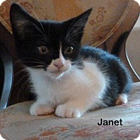 Adopt A Pet :: Janet - Portland, OR