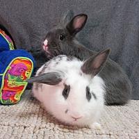 Adopt A Pet :: Lyra & Lora - Newport, DE