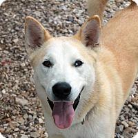 Adopt A Pet :: Alaska - Waco, TX