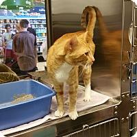 Adopt A Pet :: Blake (in CT) - East Hartford, CT