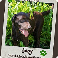 Adopt A Pet :: JOEY - MEDICAL HOLD - Lincoln, NE