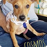 Adopt A Pet :: Cosmos Splash - San Antonio, TX