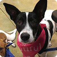 Adopt A Pet :: Jubilee - Hallandale, FL