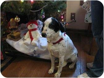 Labrador Retriever Mix Dog for adoption in Hartford, Connecticut - Lacey