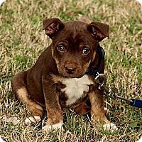 Adopt A Pet :: Dylan - Staunton, VA
