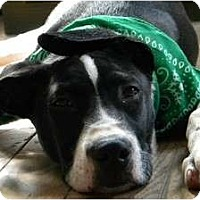 Adopt A Pet :: Dawson - Rigaud, QC