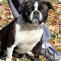 Adopt A Pet :: Gizmo - Staunton, VA