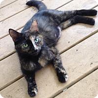 Adopt A Pet :: Autumn - Port Republic, MD