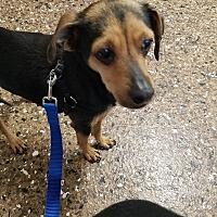 Adopt A Pet :: Nala - Rosamond, CA