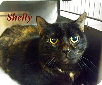 Domestic Shorthair Cat for adoption in El Cajon, California - Shelly