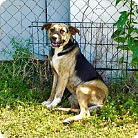 Adopt A Pet :: Barry-042730k - Tupelo, MS