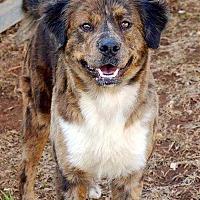 Adopt A Pet :: Kennedy - Sarasota, FL