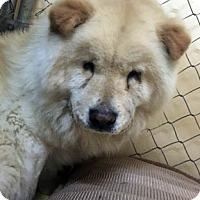Adopt A Pet :: Lovely - Ventura, CA