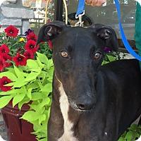 Adopt A Pet :: Zorro - Coon Rapids, MN