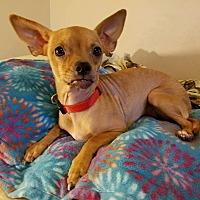 Adopt A Pet :: Muffin - Lodi, CA