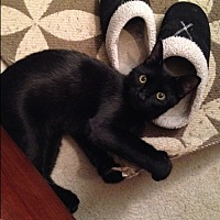 Adopt A Pet :: Sheba-Sweet & Spunky - Arlington, VA