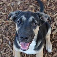 Adopt A Pet :: PHOENIX - Red Bluff, CA
