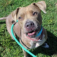 Adopt A Pet :: Lady - Atlanta, GA