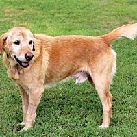 Adopt A Pet :: SARGE - Norfolk, VA