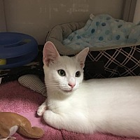 Adopt A Pet :: Frost - Raleigh, NC