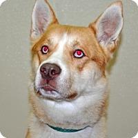 Adopt A Pet :: Banjo - Port Washington, NY
