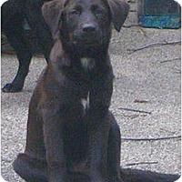 Adopt A Pet :: Graddy - Glastonbury, CT