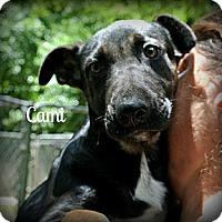 Adopt A Pet :: Cami - Vancleave, MS
