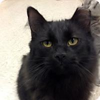 Adopt A Pet :: Meatball - Byron Center, MI